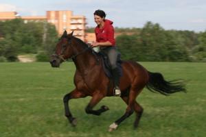 лошади моя жизнь