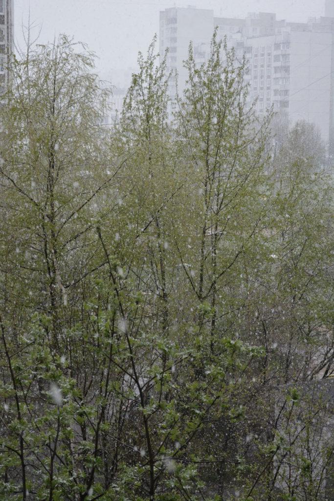 красивый майский снег maryatekun.ru фото