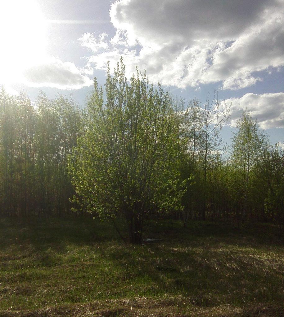 Луч солнца фотоэтюд размышления жизнь&n.e. maryatekun.ru