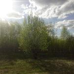 надежда фотография, фото, снимок, фотограф maryatekun.ru