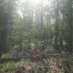 в лесу фотография, фото, снимок, фотограф maryatekun.ru