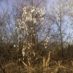 странное дерево фотография, фото, снимок, фотограф maryatekun.ru