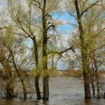 наводнение фотография, фото, снимок, фотограф maryatekun.ru