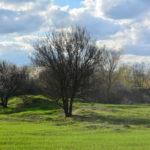 цвет рая фотография, фото, снимок, фотограф maryatekun.ru