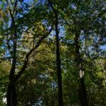небо сквозь листья фотография, фото, снимок, фотограф maryatekun.ru