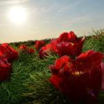 воронцы фотография, фото, снимок, фотограф maryatekun.ru