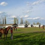 весна в заводе первой конной фотография, фото, снимок, фотограф maryatekun.ru