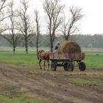 весна в заводе первой конной 2 фотография, фото, снимок, фотограф maryatekun.ru