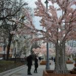 рукотворное цветение москвы, фотография, фото, снимок, фотограф maryatekun.ru