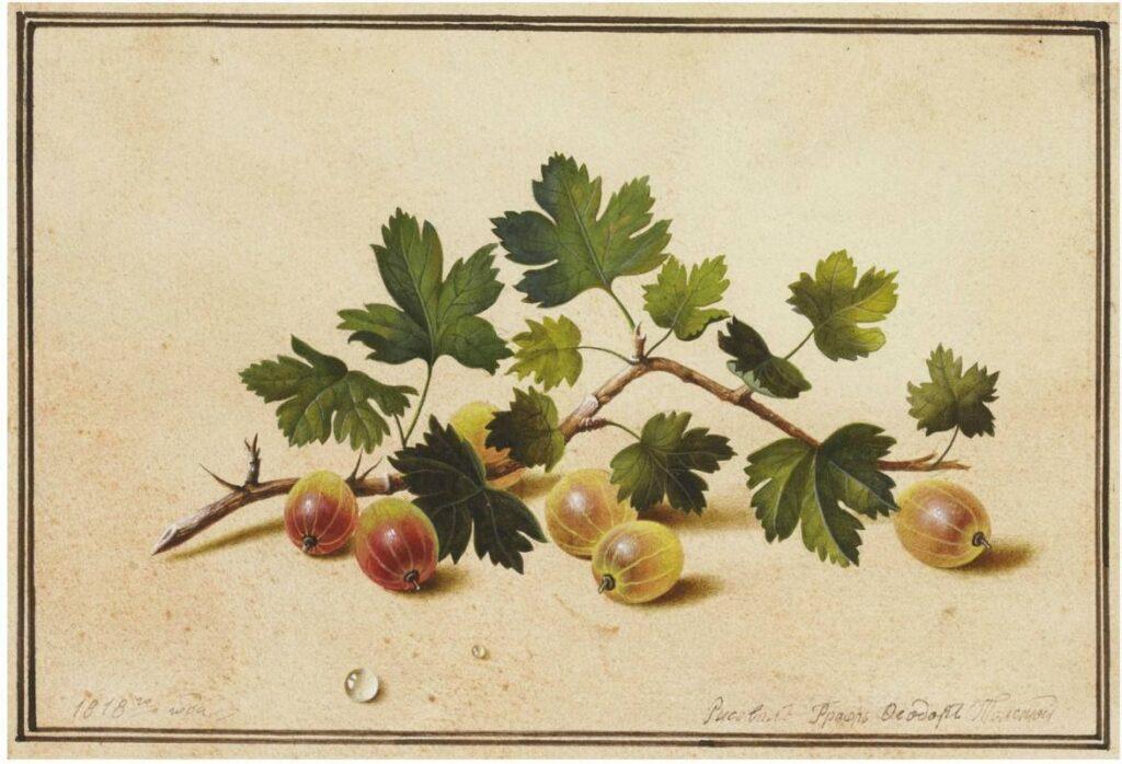 Художник Федор Толстой ветка крыжовника натюрморты с цветами и ягодами