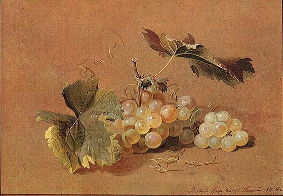 Художник Федор Толстой. Веточка винограда натюрморты с цветами и ягодами